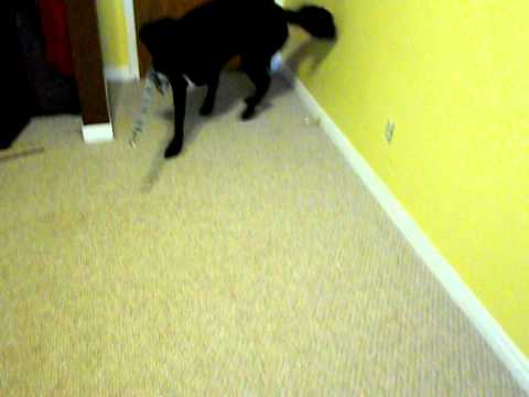 Trick - Go Fetch Your Leash