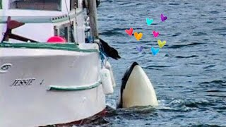 Orca (killer whale) and dog - READ THE DETAILS!