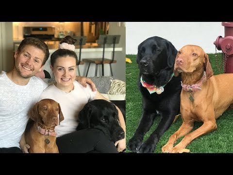 OUR SERVICE DOGS WENT ON A SECOND DATE! ft. Drew Lynch and Stella!