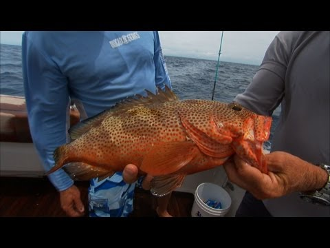 Bahamas Deep Sea Fishing for Rock Hind Grouper Mutton Snapper
