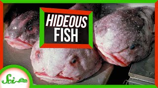 Why These 7 Fish Are So U.G.L.Y.