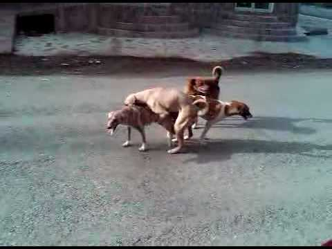 Xxx Mp4 Dog Making Out 3GP 3gp Sex