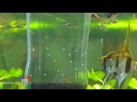 DIY Aquarium # How to make a fry trap for your aquarium # for Baby Fish #