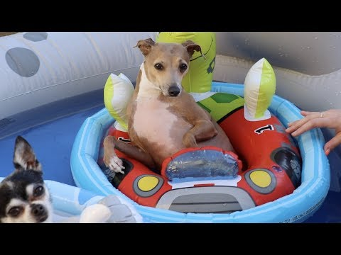 watch Throwing My Dogs A Pool Party