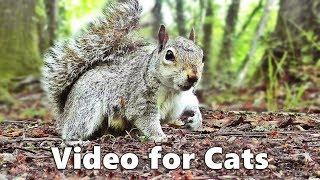 Cat TV - Squirrels and Woodland Birds Spectacular