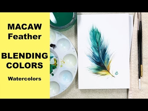 Watercolor Macaw Feather - Blending Colors