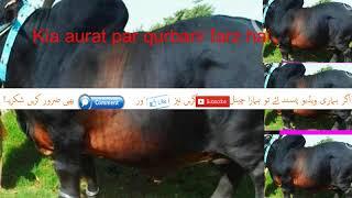 Kya Khawateen Women per Qurbani Farz hai  Islamic Bayan