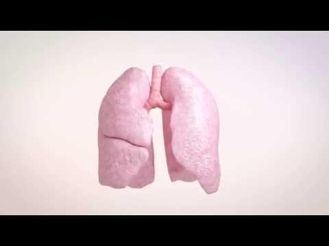 Cystic Fibrosis Animation - Antibiotics