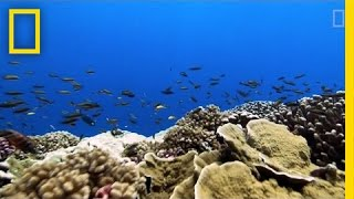 "Rising Ocean Temperatures are ""Cooking"" Coral Reefs 