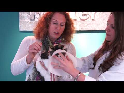 How to Put On an E-collar - Spay Neuter Charlotte