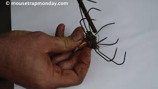 Rare Antique 1877 Eagle Claw Mouse Trap In Action. mousetrapmonday.com