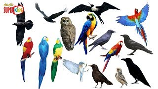 Learn Name and Sounds Cutest Birds in English | Learning Birds For