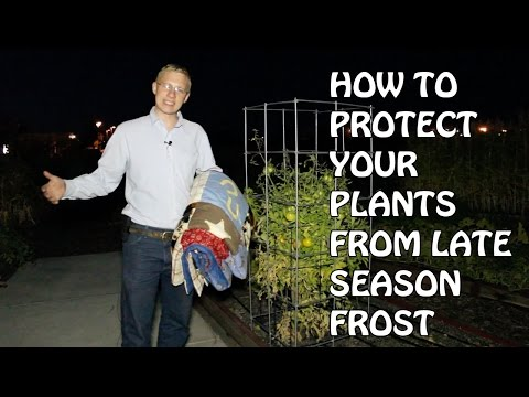 How To Protect Your Plants From Late Season Frost
