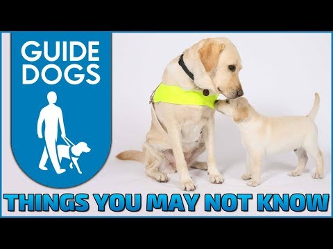Things You May Not Know About Guide Dogs UK