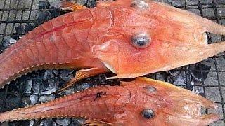 Fishermen discover STRANGE Rare Fish
