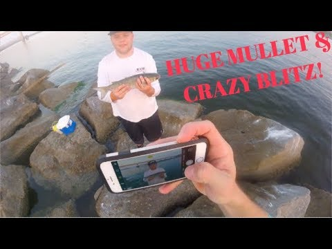 HOW TO SNAG MULLET FOR BAIT