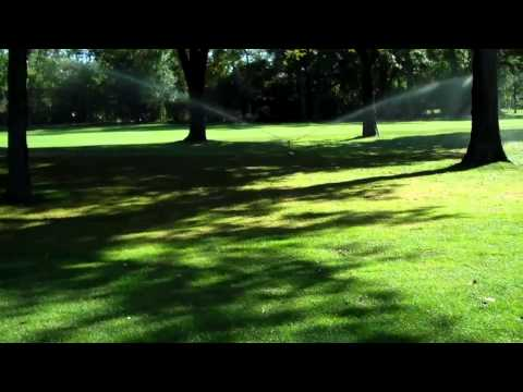 Pruning Tree Roots for Better Turf