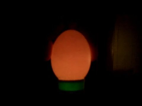 How To Candle Chickens Eggs w/ A Flashlight - Day 5