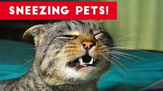 Try Not To Laugh At These Sneezing Pets & Animals of 2017 Compilation   Funny Pet Videos