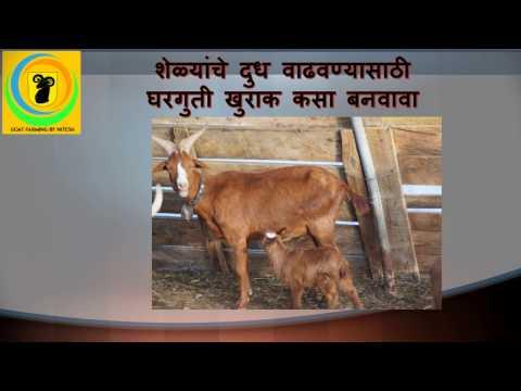 शेळ्यांच्या दूध वाढीसाठी घरगुती खुराक। How to increase milk in goat