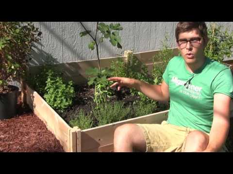How to Grow Your Own Peanuts! - Complete Growing Guide