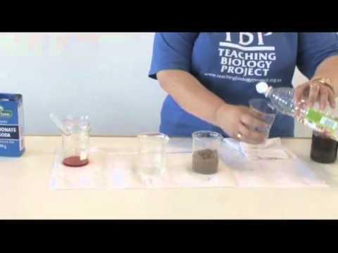 Video 9 - TESTING PH OF SOILS WITH VINEGAR & BICARBONATE OF SODA.mp4