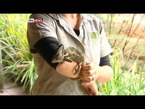 Reptile raiders steal exotic animals