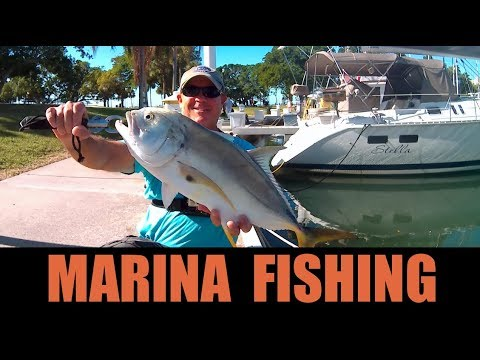 Fishing Saltwater Marinas Catching Big Fish on Live Bait Near Boat Docks