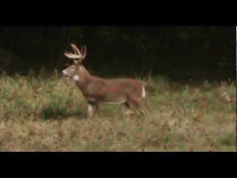 Big Red Buck