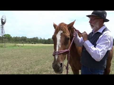 Two Methods For How To Tie A Rope Halter