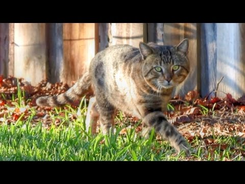 Secret Life of a Feral Cat Documentary