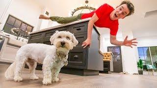 ULTIMATE Puppy Hide & Seek Challenge