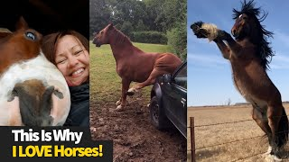 The Best Horse Videos | Funniest Horse Moments 2021
