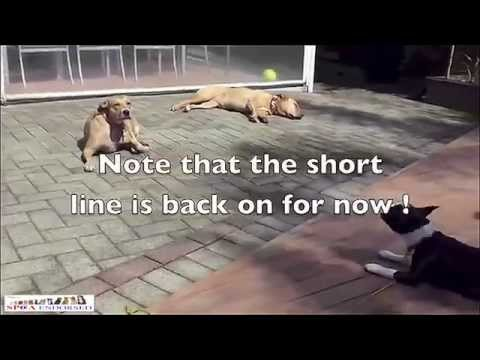 How to Stop a Dog Barking At Other Dogs, How to Calm an Aggressive Dog, Get your Dog to Stop Barking