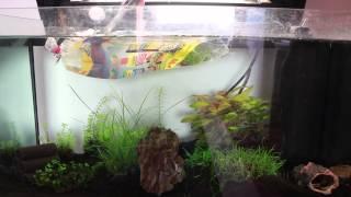 Adding shrimps to a aquarium