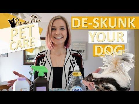 How to De-Skunk Your Pet - Dog/Cat