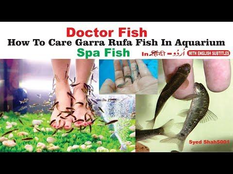 DOCTOR FISH GARRA RUFA | AWESOME AQUARIUM FISH SPA pedicure.treats skin diseases