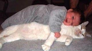 Kucing Babysitter Terbaik Dan Pengasuh - Lucu Kucing