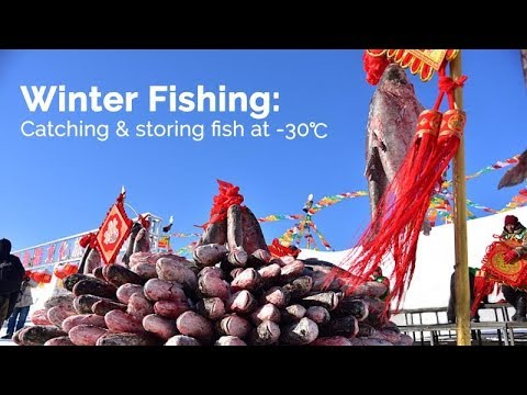 Live: Winter Fishing: Catching & storing fish at -30℃探访查干湖冬捕与渔获存放