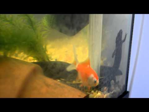 August 2014 Update: My First Aquarium