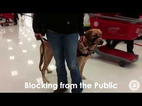 Fetching Freedom - PTSD Service Dog In Training - Out In Public