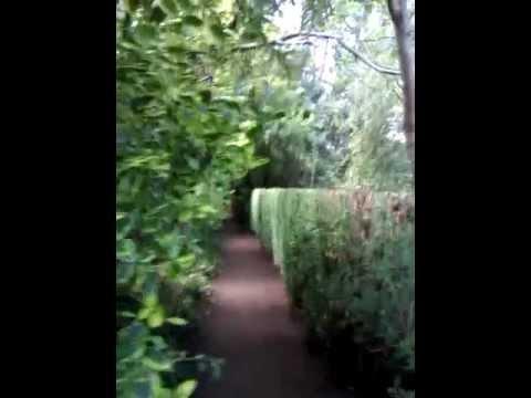 14 Foot high Privet Hedge (After)