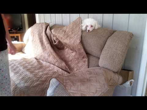 INNX Quilted Microfiber Suede Canine Sofa/Couch Covers *WHAT NOT TO DO