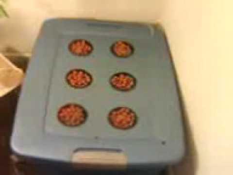 How to build a 6 Net pot Bubbleponics System.3GP