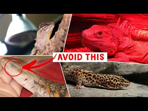 All About Reptile Lighting!   FAQ FRIDAYS