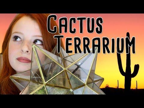 How to Plant a Glass Terrarium with Cactus Plants / Cacti | NiliPOD