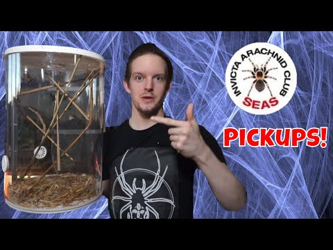 S.E.A.S Thoughts and Pickups - Orb Weaver Colony!