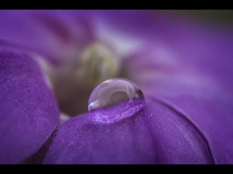 MACRO PHOTOGRAPHY TIPS AND TRICKS - Using One Water Drop As A Compositional Tool