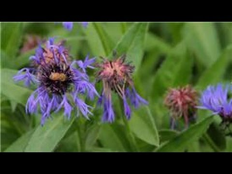 Flower Gardening : How to Find Flowers for Your Garden That Do Not Attract Bees
