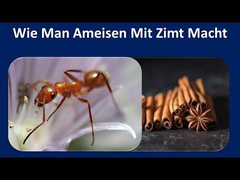 Zimt für Ant abweisend